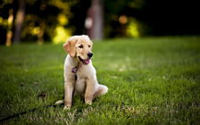 Dog wide wallpapers and HD wallpapers