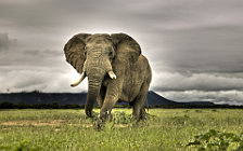 Elephants wide wallpapers and HD wallpapers