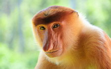 Monkeys wide wallpapers and HD wallpapers