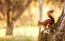 Squirrels wide wallpapers and HD wallpapers