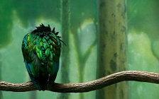 Bird wide wallpapers and HD wallpapers