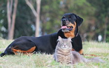 Cat and Dog wide wallpapers and HD wallpapers