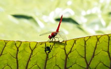 Dragonfly wide wallpapers and HD wallpapers