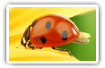 Ladybird desktop wallpapers