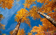 Autumn wide wallpapers and HD wallpapers