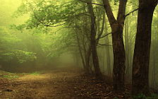 Forest wide wallpapers and HD wallpapers