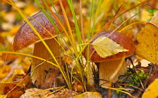 Mushrooms wide wallpapers and HD wallpapers